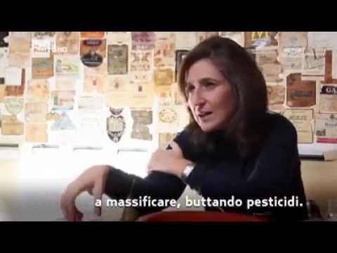 La Monsanto ha brevettato la sterilità