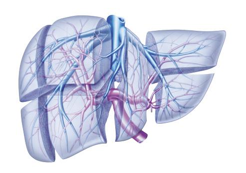 Carcinoma vie biliari, quale terapia?