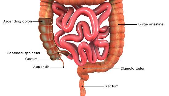 Tumore: significato della classificazione snomed