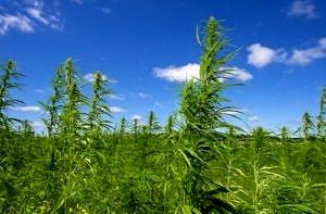 """Cannabis light, EasyJoint: """"Ben vengano i controlli dei NAS, legittimano l'operazione"""""""