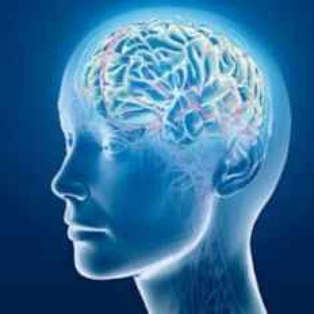 Aree specifiche del cervello ci rendono più intelligenti