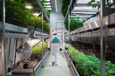 Visita ad uno dei piu' grandi siti di produzione della marijuana in Massachusetts