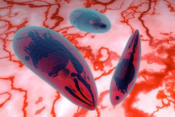Toxoplasmosi malattia