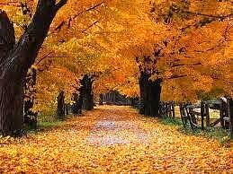 Roma Capitale. 'Si sta come d'autunno sugli alberi le foglie'