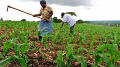 Uganda, il vorace accaparramento di terre fertili favorito dal governo