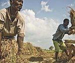 """Povertà, """"Il mondo sarebbe più stabile se si investisse di più nello sviluppo rurale a lungo termine"""