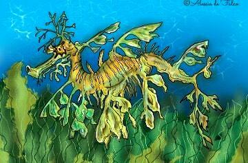 Cavalluccio marino da colorare