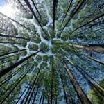 Dieci curiosità sui boschi italiani