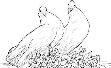 Disegni di colombe da colorare