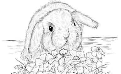 Disegni di conigli da colorare