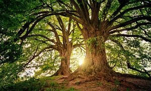 Per ogni neonato si deve piantare un albero. Così dice la legge in Italia