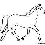 Cavalli da colorare