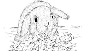 Conigli da colorare