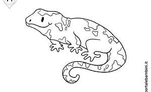 Salamandre da colorare